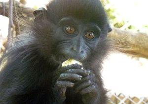 animal rescue – Primate Adventures